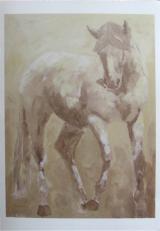 Knabstrupper Horse Card Set