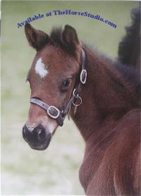 Foal Baby Face