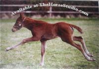 Foal Striding Out