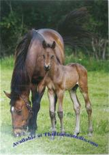 Mare and Foal Keeping Mum