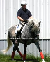 Horse Polo Wraps