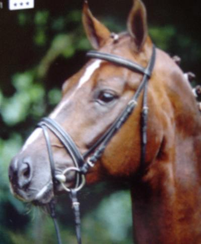 The Munster Snaffle Bridle