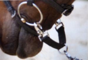 Black Nylon Horse Lunge (Longe) Coupling